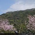0302竹子湖 (22).jpg