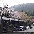 0302竹子湖 (32).jpg