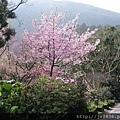 0302竹子湖 (31).jpg