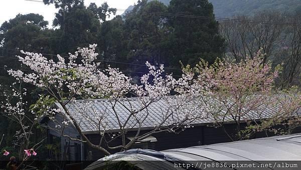 0302竹子湖 (40).jpg