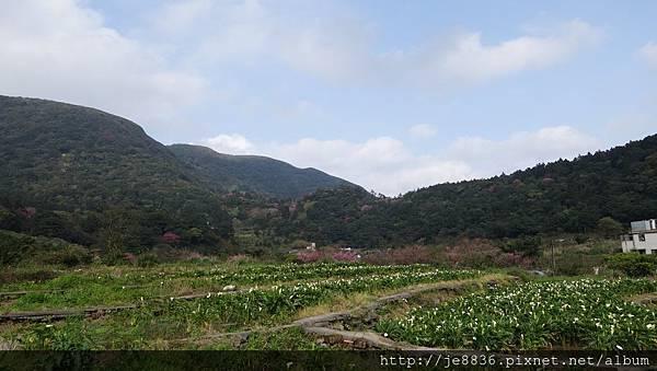 0302竹子湖 (45).jpg