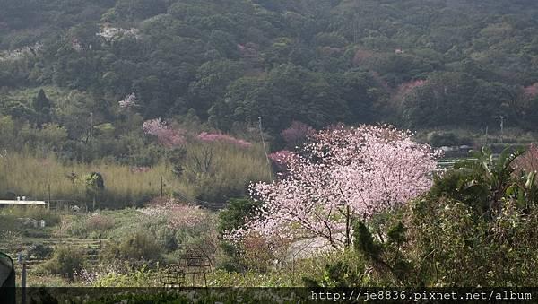 0302竹子湖 (44).jpg