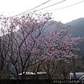 0302竹子湖 (47).jpg