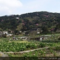 0302竹子湖 (46).jpg