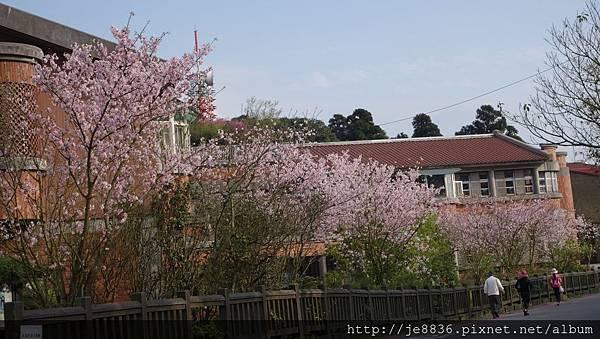 0302竹子湖 (49).jpg