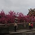 0317竹林寺櫻花11.jpg