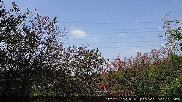 0322長庚養生村25.jpg