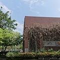 0322龜山紫藤2.jpg