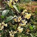 0322龜山紫藤11.jpg