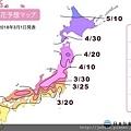0323東京賞櫻71.jpg