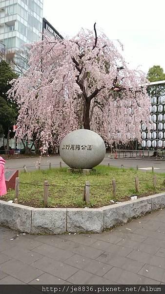 0323東京賞櫻25.jpg