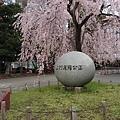 0323東京賞櫻24.jpg