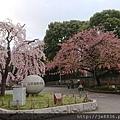 0323東京賞櫻29.jpg