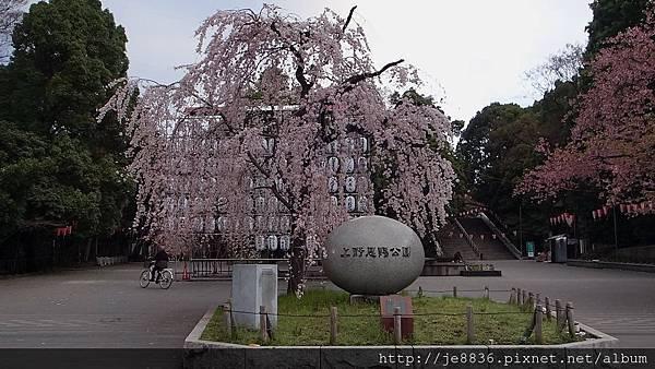 0323東京賞櫻63.jpg