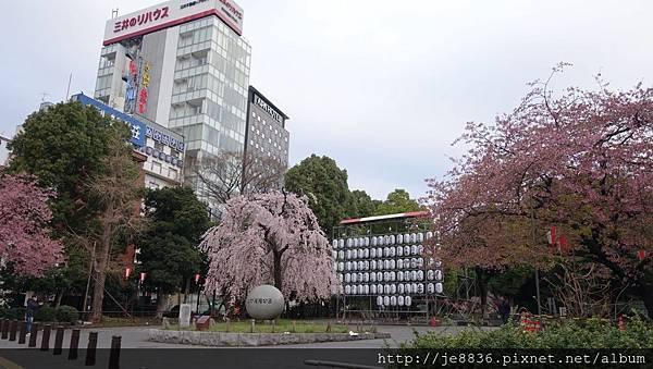0323東京賞櫻66.jpg
