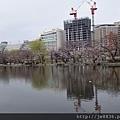 0323東京賞櫻78.jpg