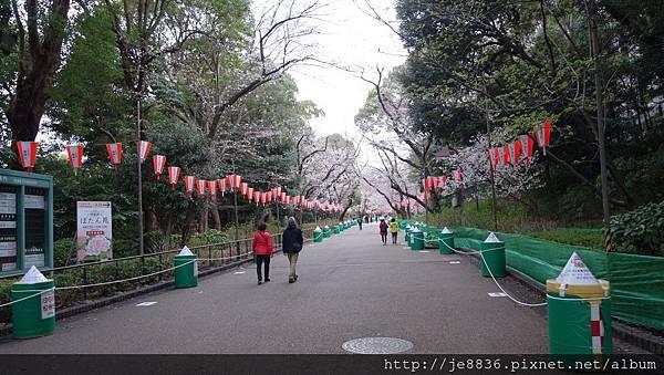 0323上野公園1.jpg