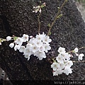 0323上野公園4.jpg