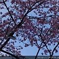 0323上野公園5.jpg