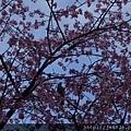 0323上野公園6.jpg