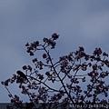 0323上野公園7.jpg