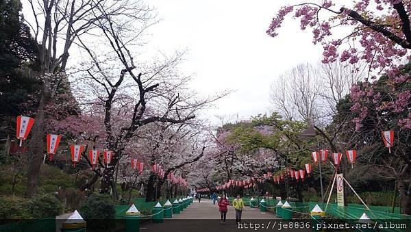 0323上野公園10.jpg