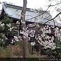 0323上野公園9.jpg