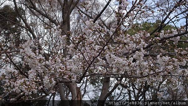 0323上野公園12.jpg