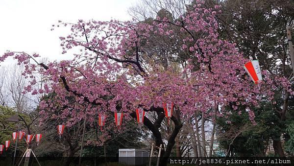 0323上野公園11.jpg