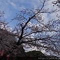 0323上野公園13.jpg