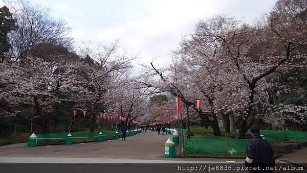 0323上野公園14.jpg