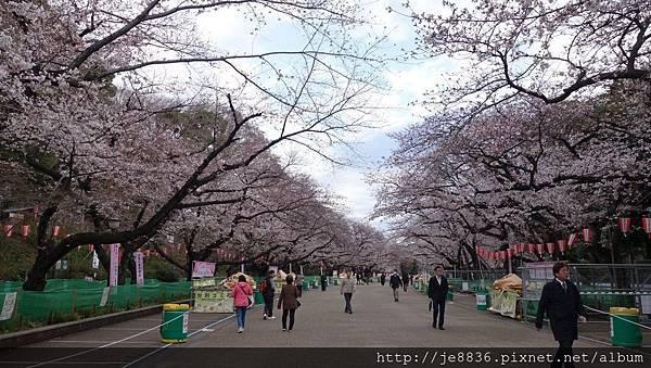 0323上野公園17.jpg
