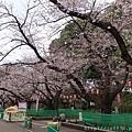 0323上野公園18.jpg