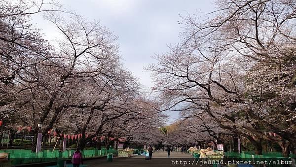 0323上野公園20.jpg