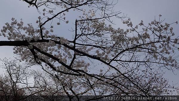 0323上野公園21.jpg