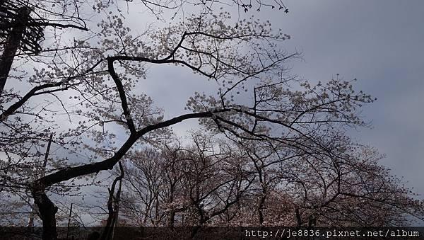 0323上野公園22.jpg