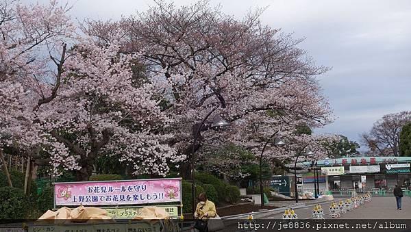 0323上野公園26.jpg
