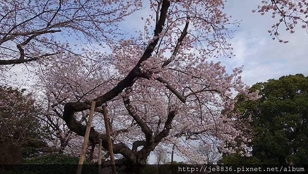 0323上野公園24.jpg