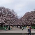 0323上野公園30.jpg