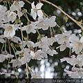 0323上野公園33.jpg