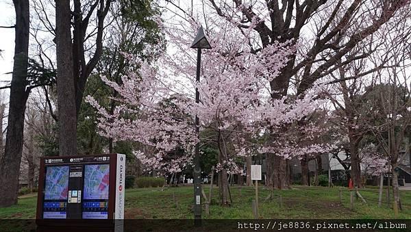 0323上野公園34.jpg