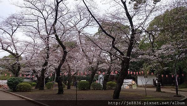 0323上野公園38.jpg
