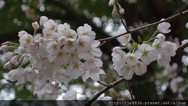 0323上野公園37.jpg