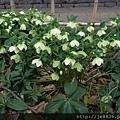 0323上野公園36.jpg