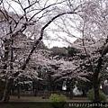 0323上野公園40.jpg