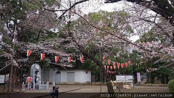 0323上野公園39.jpg
