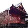 0323上野公園42.jpg