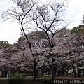 0323上野公園41.jpg