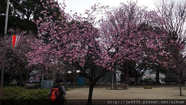 0323上野公園45.jpg