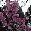 0323上野公園46.jpg